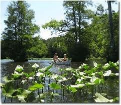 canoeing-on-the-pocomoke-river_0