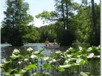 canoeing-on-the-pocomoke-river