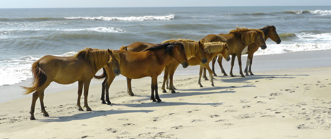 assategue2